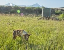 A photo of pasture with pigs in Hotchkiss, Colorado.